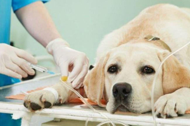 imagem TJDFT condena veterinário por sofrimento desnecessário a animal de estimação
