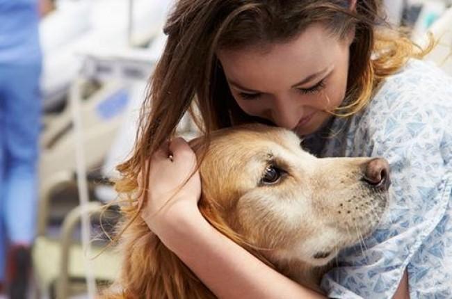 imagem Podemos receber a visita de nossos animais domésticos no hospital?